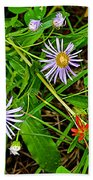 Asters And Scarlet Paintbrush On Swan Lake Trail In Grand Teton National Park-wyoming  Bath Towel