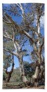 Australian Native Tree 12 Bath Towel