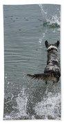 Australian Shepherd Fun At The Lake Chasing The Ball Bath Towel