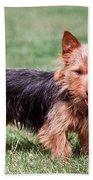 Australian Terrier Dog Bath Towel