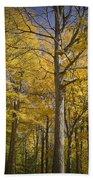 Autumn Orange Forest Colors At Hager Park No.1189 Bath Towel