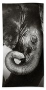 Baby Elephant Seeking Comfort Bath Towel
