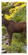 Baby Moose Baxter State Park Bath Towel