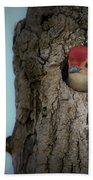Baby Red Bellied Woodpecker Bath Towel