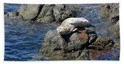 Baby Sea Lion On Rock At San Juan Island Hand Towel