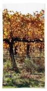 Backlit Autumn Vineyard Bath Towel