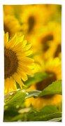 Backlit Sunflower Bath Towel