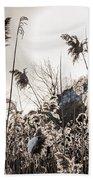 Backlit Winter Reeds Hand Towel by Elena Elisseeva