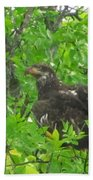 Bald Eagle In A Tree  Bath Towel