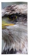 Bald Eagle - Juvenile - Profile Bath Towel