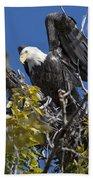 Bald Eagle On Nest Near The Oxbow Bath Towel
