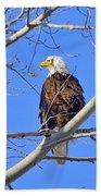 Bald Eagle Perched Bath Towel