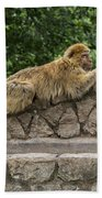 Barbary Macaques Bath Towel