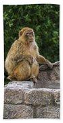 Barbary Macaque Bath Towel