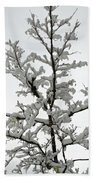 Bare Branches With Snow Bath Towel