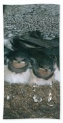 Barn Swallows Hand Towel