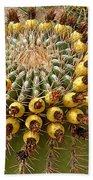 Barrel Cactus Bearing Fruit At El Mirador Rv Resort In San Carlos-sonora-mexico Bath Towel