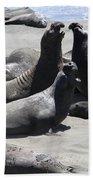 Beachmasters - Elephant Seals Bath Towel