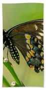 Beautiful Black Swallowtail Hand Towel