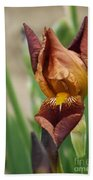 Beautiful Brown Bearded Iris Bath Towel