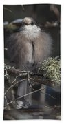 Beautiful Grey Jay Pose Bath Towel