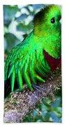 Beautiful Quetzal 2 Bath Towel