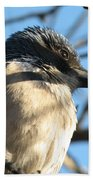 Beautiful Western Scrub Jay Bath Towel
