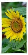 Beautiful Yellow Sunflower In Full Bloom Bath Towel