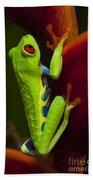 Beauty Of Tree Frogs Costa Rica 9 Bath Towel