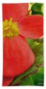 Begonia Volumia Bath Towel