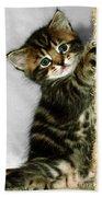 Benny The Kitten Playing Bath Towel