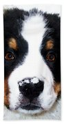 Bernese Mountain Dog - Baby It's Cold Outside Bath Towel