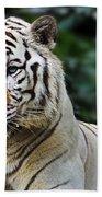 Big Cats 2 Bath Towel