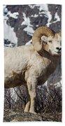 Big Horn Ram In Spring Bath Towel