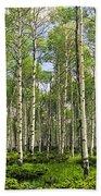 Birch Tree Grove In Summer Bath Towel