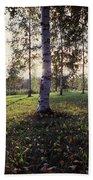 Birch Trees, Imatra, Finland Bath Towel