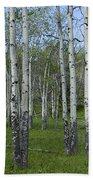 Birch Trees In A Grove No. 0148 Bath Towel