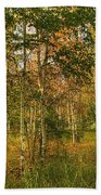 Birch Trees2 Bath Towel
