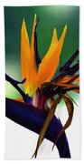 Bird Of Paradise Flower - Square Bath Towel