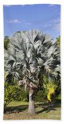 Bismarck Palm  Bismarckia Nobilis Bath Towel