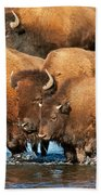 Bison Family In The Lamar River In Yellowstone National Park Bath Towel