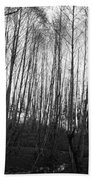 Black And White Birch Stand Bath Towel