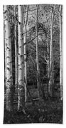 Black And White Photograph Of Birch Trees No. 0126 Bath Towel