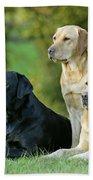 Black And Yellow Labrador Retrievers Bath Towel