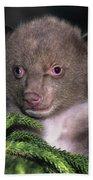 Black Bear Cub Portrait Wildlife Rescue Bath Towel
