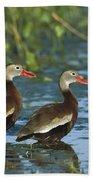 Black-bellied Whistling Ducks Wading Bath Towel