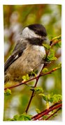 Black Capped Chickadee Bath Towel