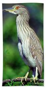 Black-crowned Night Heron Juvenile Bath Towel