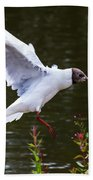 Black Head Gull - Preparing For Landing Bath Towel