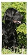 Black Labrador Dog Bath Towel